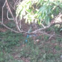 pretty bird 9 September 2014 004